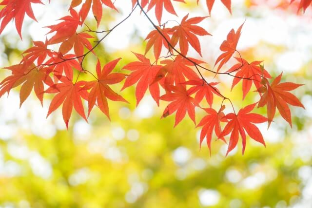 秋のゆらぎ肌の予防対策